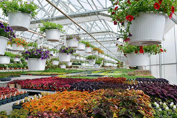 Story's Nursey Greenhouse